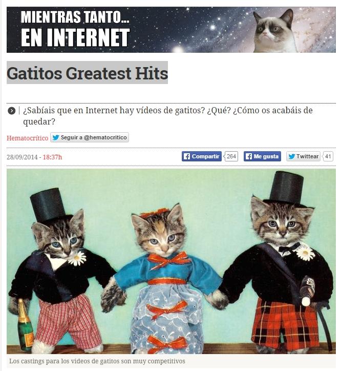 videos gatitos
